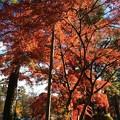 Photos: 長瀞 紅葉4