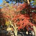 Photos: 長瀞 紅葉5