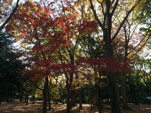 代々木公園 紅葉1