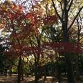Photos: 代々木公園 紅葉1