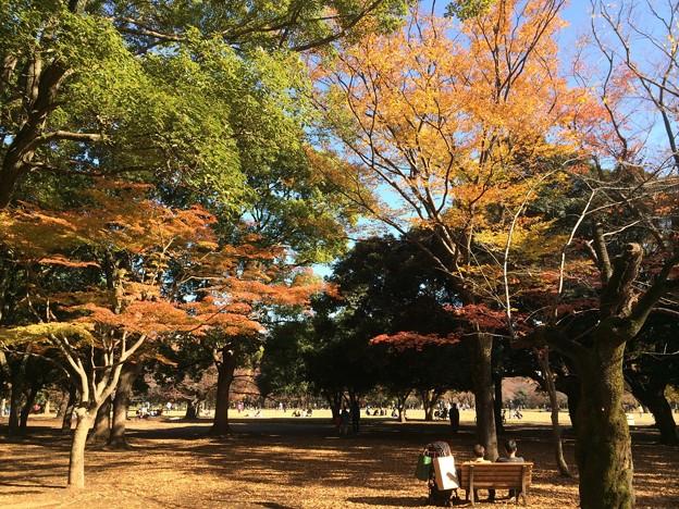 代々木公園 紅葉2
