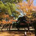 Photos: 代々木公園 紅葉2