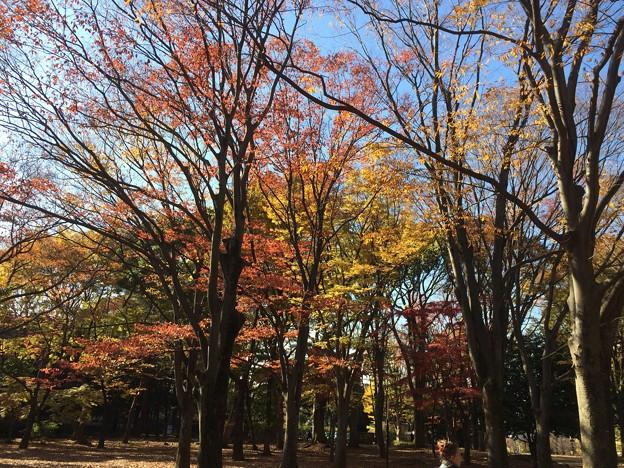 代々木公園 紅葉3