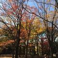 Photos: 代々木公園 紅葉3