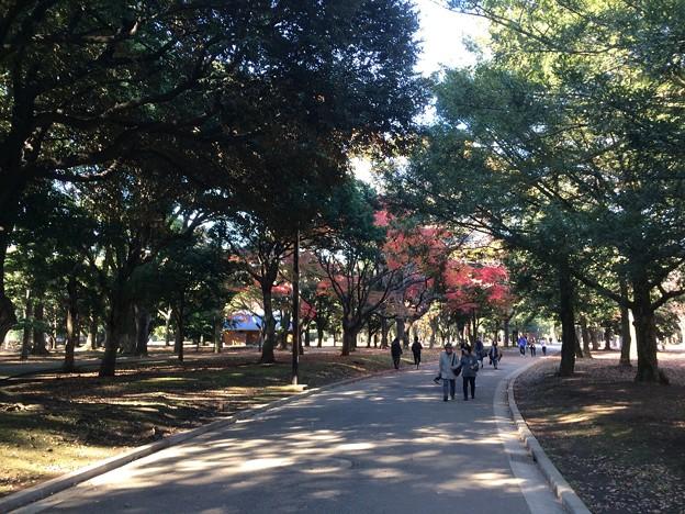 代々木公園 紅葉4