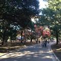 Photos: 代々木公園 紅葉4