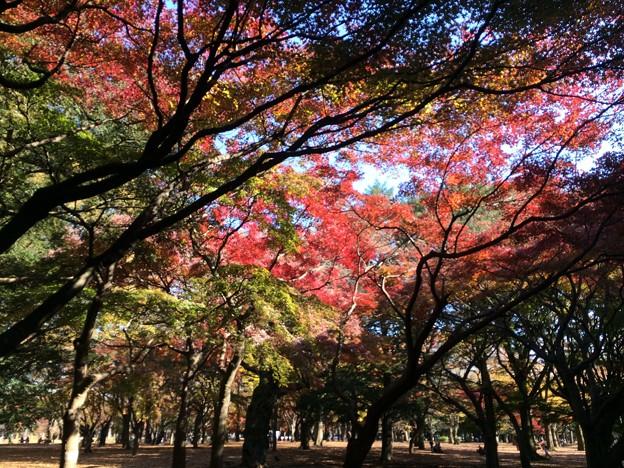 代々木公園 紅葉5