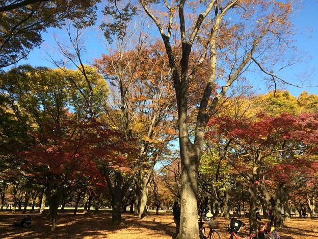 代々木公園 紅葉6