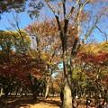 Photos: 代々木公園 紅葉6