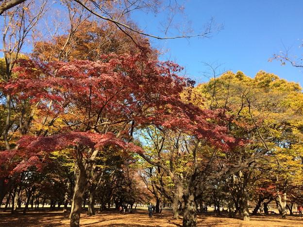 代々木公園 紅葉7