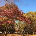 Photos: 代々木公園 紅葉7