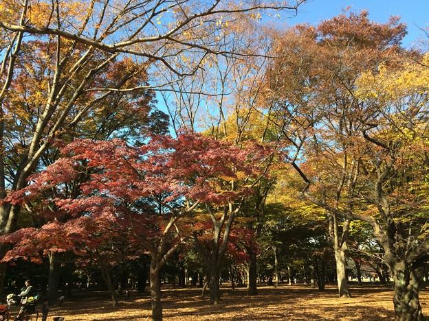 代々木公園 紅葉8