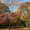 Photos: 代々木公園 紅葉8