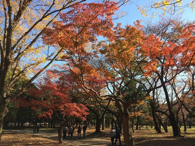代々木公園 紅葉9