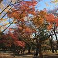 Photos: 代々木公園 紅葉9