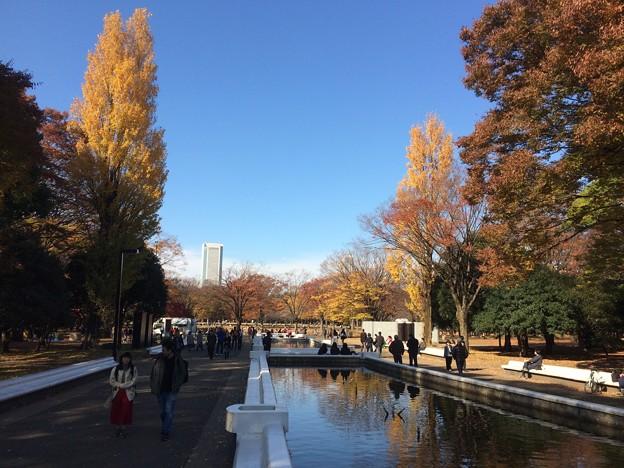 代々木公園 紅葉10