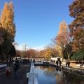 Photos: 代々木公園 紅葉10