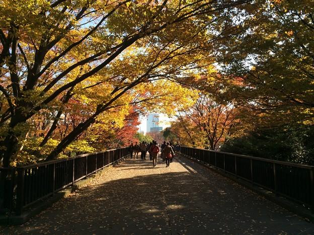 代々木公園 紅葉11