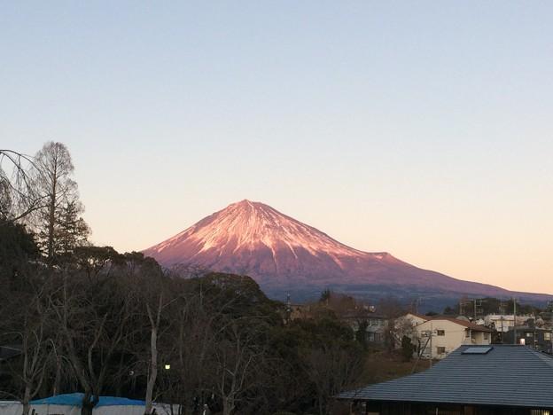 富士山本宮浅間大社から見た富士山