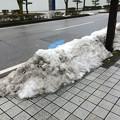 Photos: 彦根の残雪12