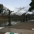 Photos: 彦根城内4