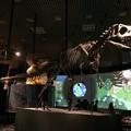 Photos: 国立科学博物館2