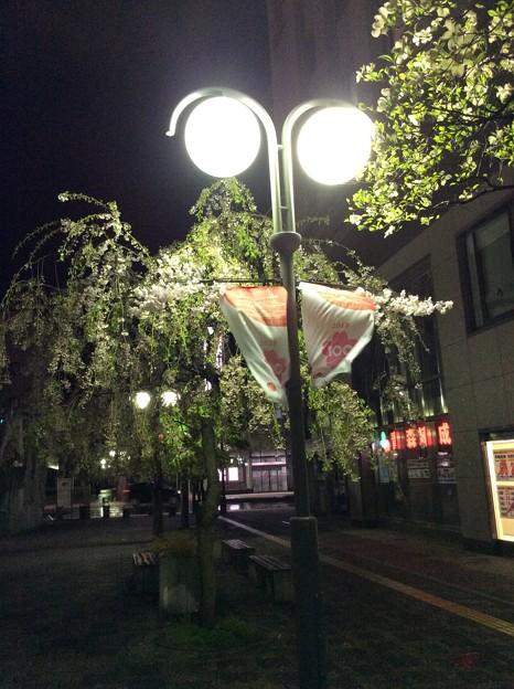 弘前駅前の桜