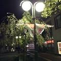 Photos: 弘前駅前の桜