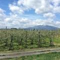 津軽平野と岩木山1 ~りんご畑~
