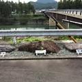 Photos: 中央構造線粥見観測地4