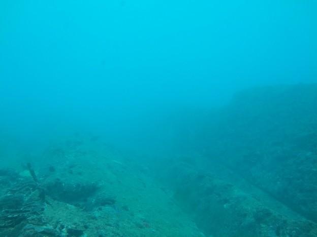 竜串9 ~足摺海底館内より~