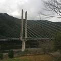 Photos: 西土佐中半の斜張橋