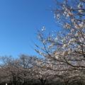 千葉 青葉の森公園