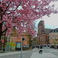 写真: ストラスブールの桜