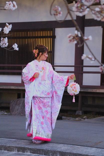 光前寺の枝垂桜#1