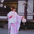 写真: 光前寺の枝垂桜#1