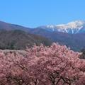 写真: 高遠の春
