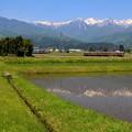 写真: 初夏の飯田線