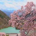写真: 桜と湖