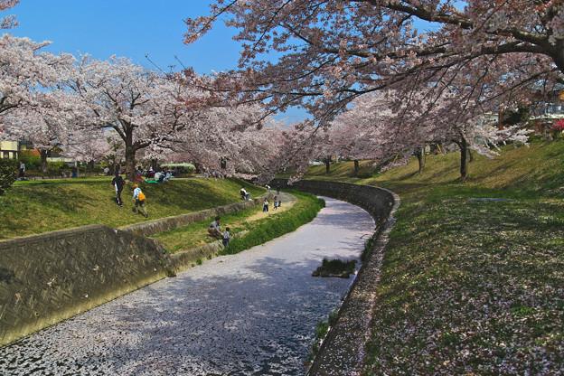 Photos: 花弁の川 壱