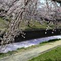 写真: 花弁の川 弐