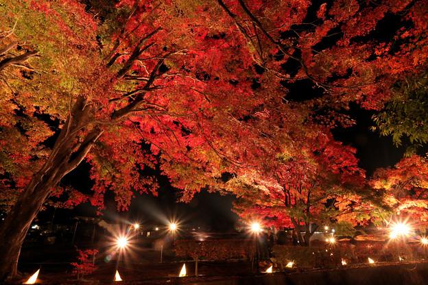 Photos: 紅葉まつりライトアップ