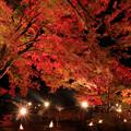 紅葉まつりライトアップ