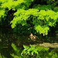Photos: 徳川園