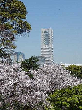 090409-野毛山動物園の桜 (1)