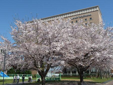 090409-MM21 汽車道と桜 (9)