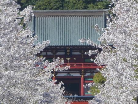 170413-段葛 (93)