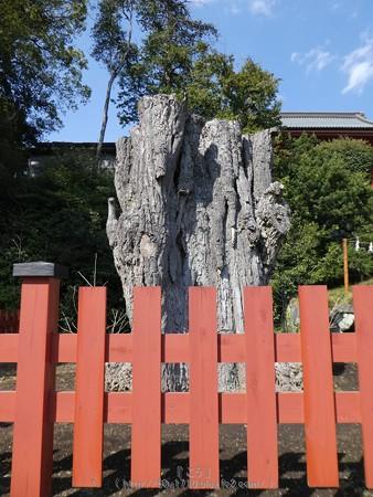 170413-鶴岡八幡宮 (8)