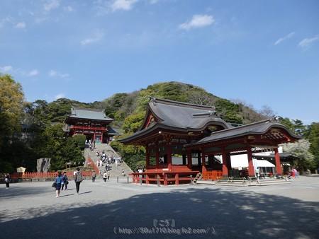 170413-鶴岡八幡宮 (28)