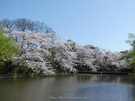 170413-鶴岡八幡宮 (37)